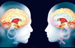 Los hombres tienen el cerebro más grande pero menos eficiente que las mujeres