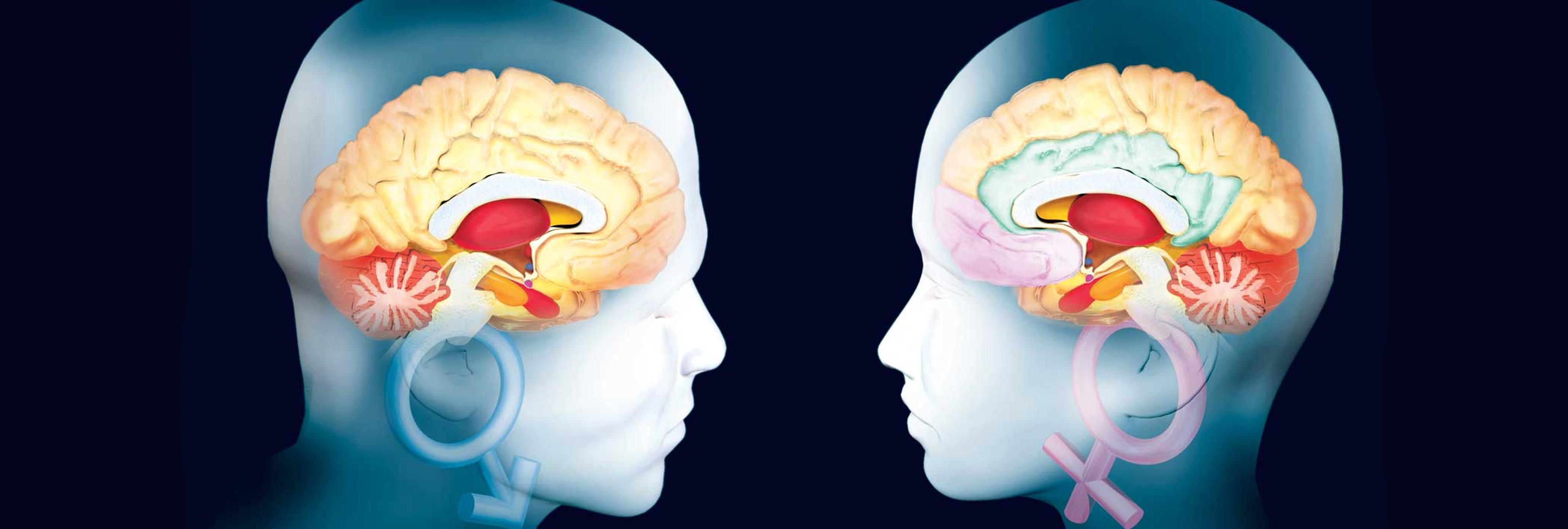 Los hombres tienen el cerebro más grande pero menos eficiente que ...