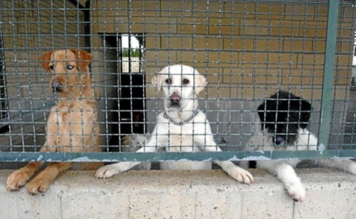 Varios perros abandonados en una perrera