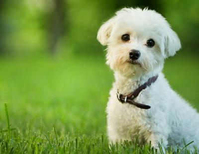 El Congreso debatirá la prohibición de sacrificar mascotas abandonadas