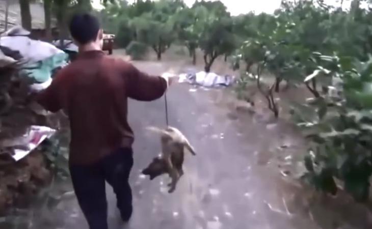 Los perros sufrían todo tipo de vejaciones durante la celebración dle festival
