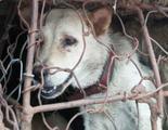 China suspende el festival de la carne de perro por aclamación popular