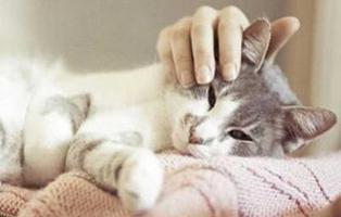 Esta empresa te paga por abrazar gatos todo el día