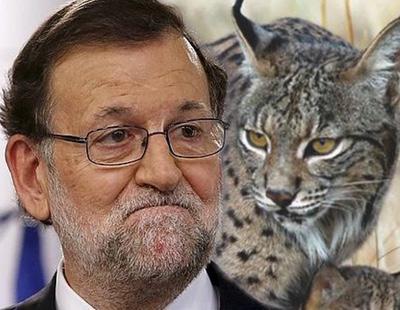 """El PP quiere premiar a los cazadores de animales por """"su compromiso con el medioambiente"""""""