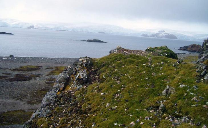 La Antártida está reverdeciendo por el cambio climático