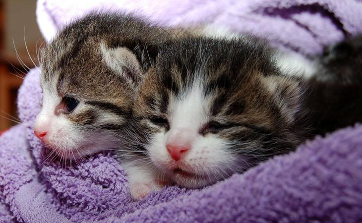 Al menos 200 gatos han muerto en tan sólo un mes en una localidad del sur de Francia