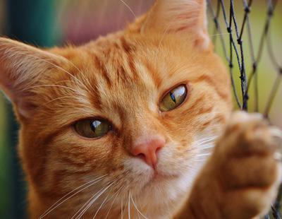 Una persona asesina a 200 gatos en un mes en una localidad francesa