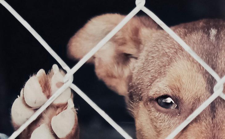 Las denuncias por maltrato animal han aumentado en los últimos años