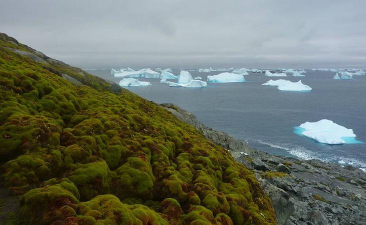 La Antártida está reverdeciendo