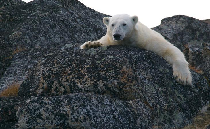 Los Polos son un gran elemento regulador de la temperatura del Planeta. Se están derritiendo por completo