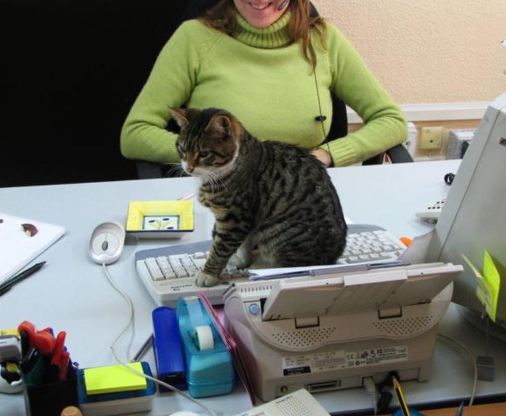 Cada vez hay más empresas que fomentan que los trabajadores acudan con sus mascotas al puesto de trabajo