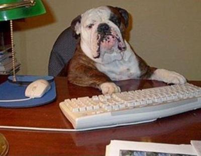 Día Internacional de llevar tu mascota al trabajo: ¿una locura?