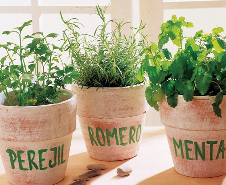 Las plantas aromáticas aportan una nota muy destacada en esta noche según la tradición gallega