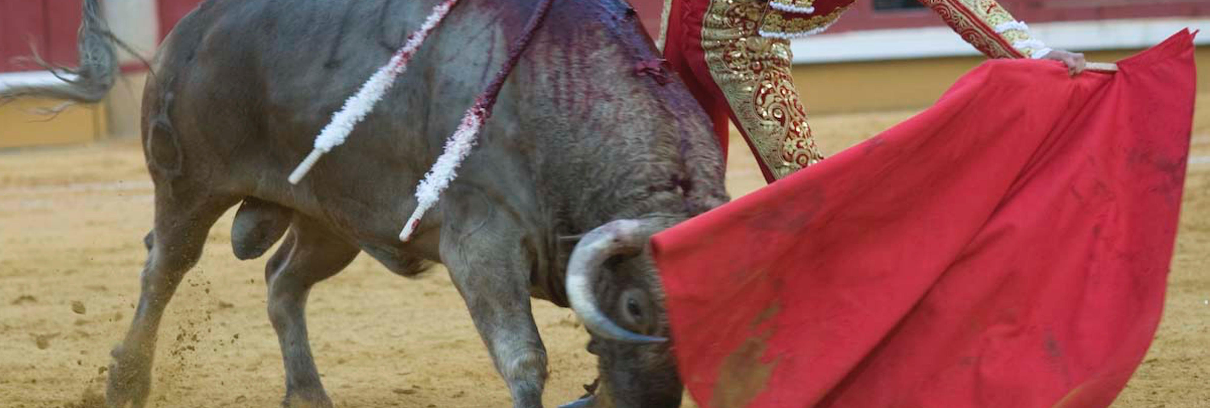 El Parlamento Europeo plantea prohibir la tauromaquia en España