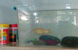 Deja a su pez llamado 'Pesesín' en el portal y al cuidado de sus vecinos mientras se va de vacaciones