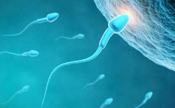La reducción de esperma sólo se está produciendo en el ámbito considerado como 'Occidente'