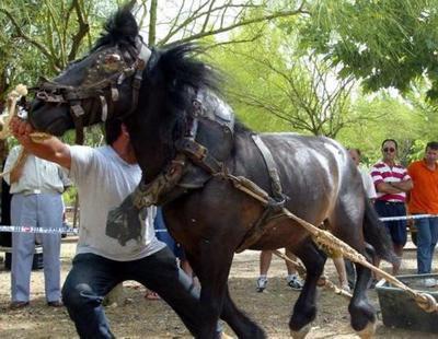 """Valencia subvenciona un """"deporte"""" consistente en golpear salvajemente a caballos"""