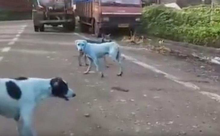 Algunos de los perros contaminados por el agua del río