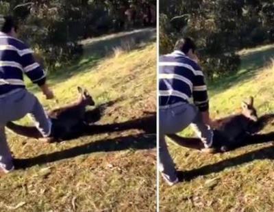 Detienen a un hombre por degollar cruelmente a un canguro para divertirse