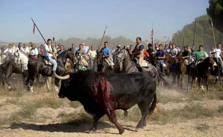 En el nuevo Toro de la Vega no se puede matar al animal
