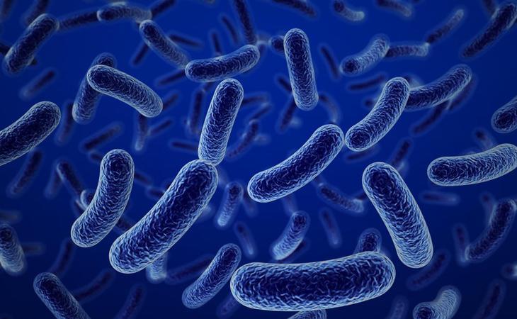 En las esponjas con las que fregamos la vajilla puede haber todo tipo de bacterias