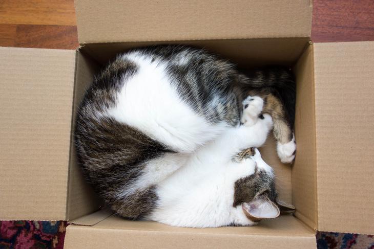 Los gatos se enroscan sobre sí mismos para conservar el calor