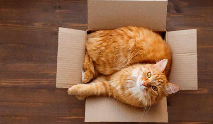 Las cajas reducen el estrés y mejoran el entorno de los gatos