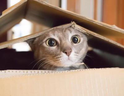 La razón por la que a los gatos les gustan tanto las cajas de cartón
