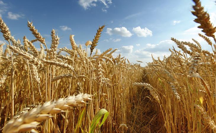 El aumento de CO2 provocará el aceleramiento de la fotosíntesis