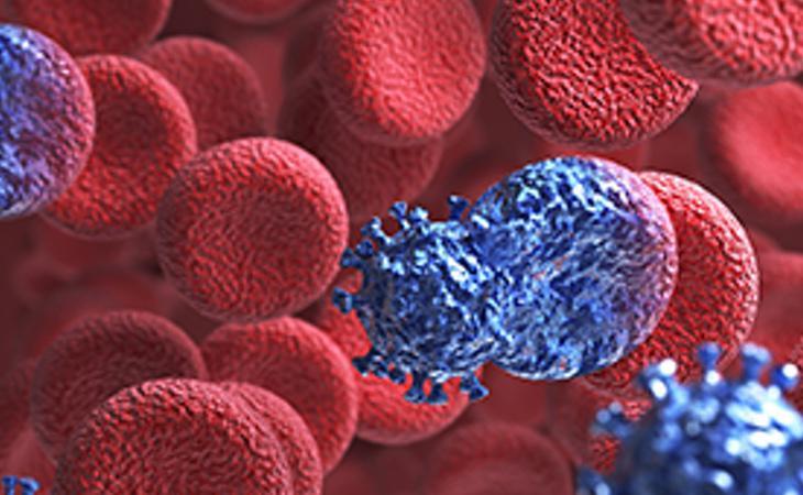 El virus muta cuando los anticuerpos del ser humano intentan destruirlo
