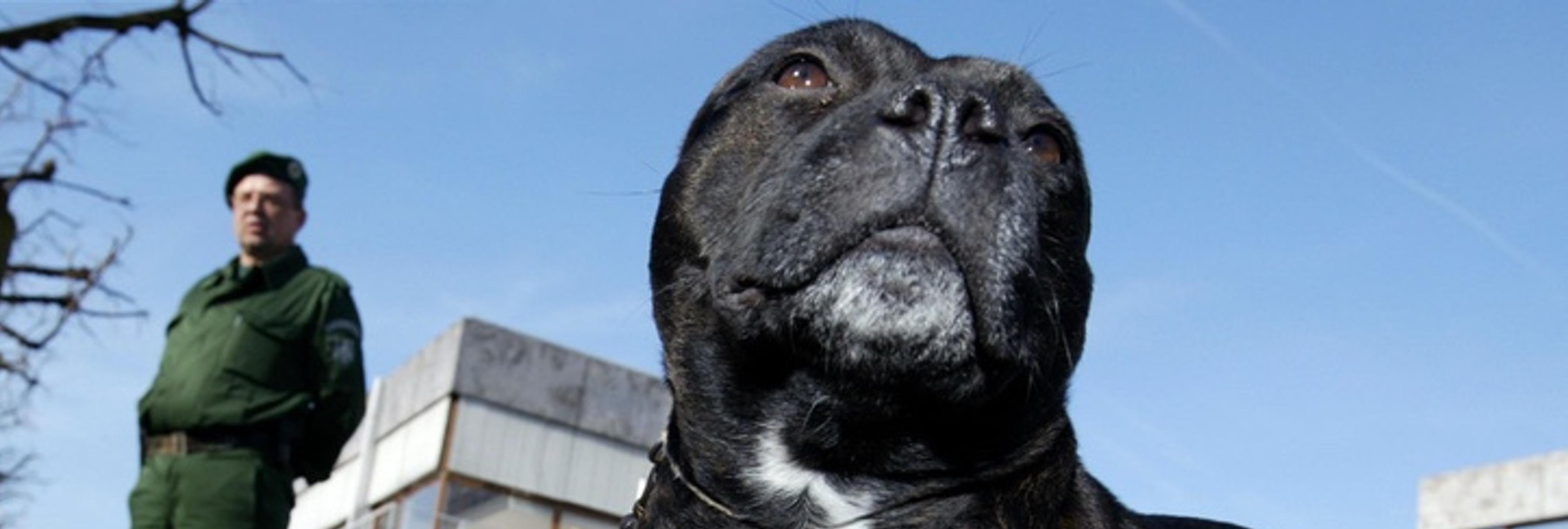 Un perro drogado con coca y morfina mata a su dueño en medio de un vídeo contra las drogas