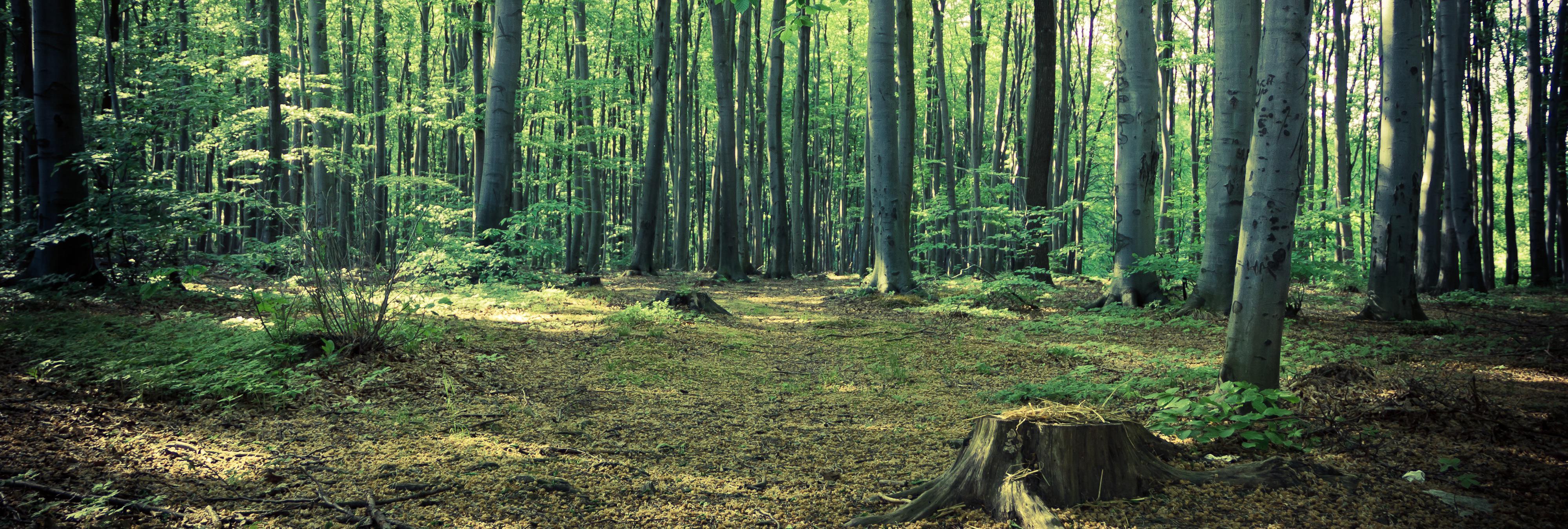 Pasa una década viviendo a la intemperie en un bosque para no tener que ver a su mujer