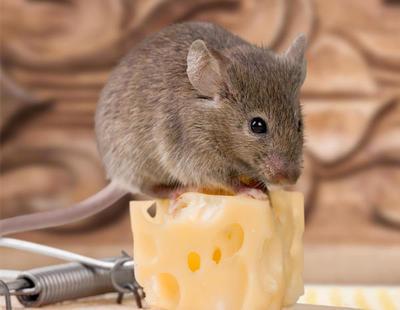 Dos hombres atan y torturan a un ratón y lo graban en vídeo