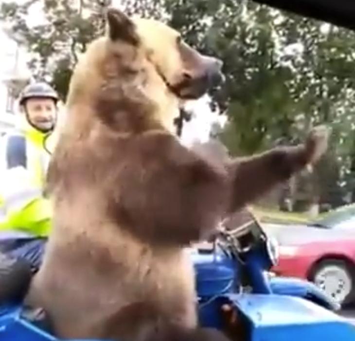 Como es de esperar, el oso captaba la atención de todos sentado en su sidecar