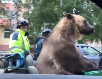 Expectación en Rusia ante un oso recorriendo las calles con su moto