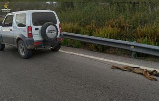 """Absuelto tras matar a un perro remolcándolo por el asfalto porque es """"una broma macabra"""""""