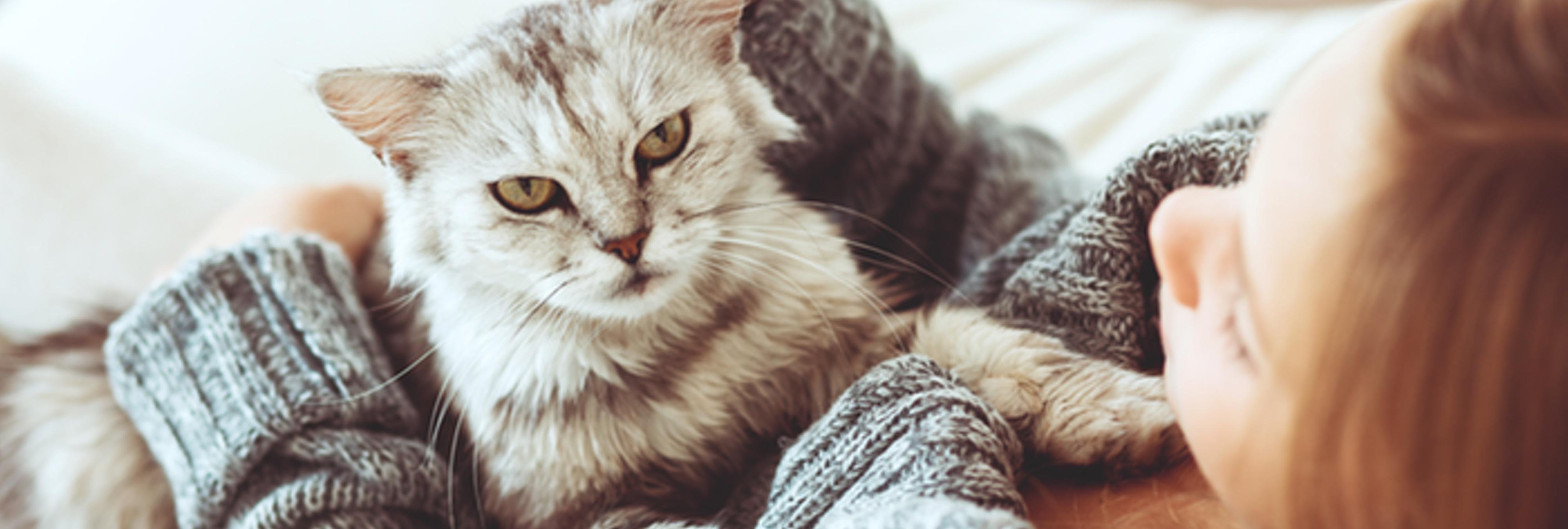 Investigan a un gato por intentar asesinar a una anciana en Japón