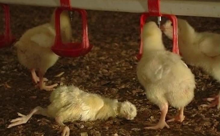 Las condiciones de vida de los animales son insalubres