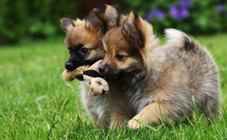 Clonar a tu perro cuesta 40.000 euros según una empresa estadounidense