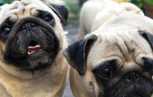 Una empresa estadounidense puede clonar a tu mascota por 40.000 euros