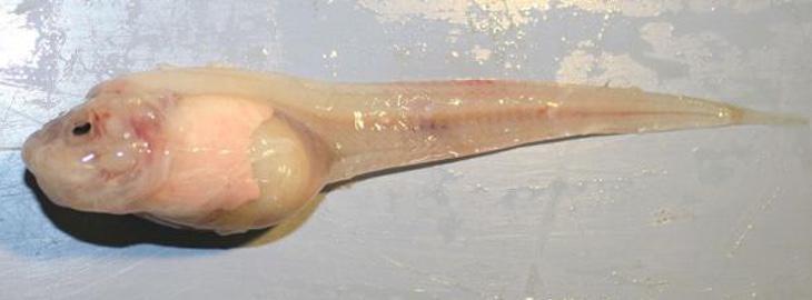 Los investigadores han quedado impresionados con la morfología de esta especie