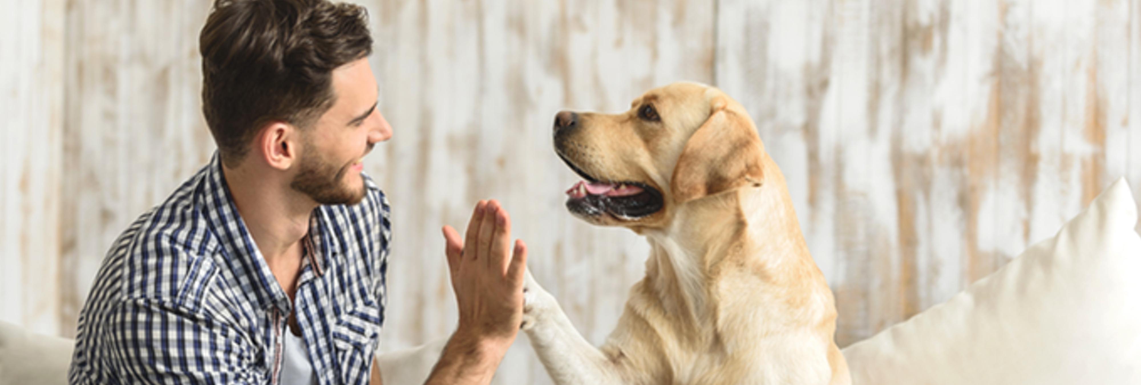 Dos gallegos desarrollan una tecnología que te dice cómo se siente tu mascota
