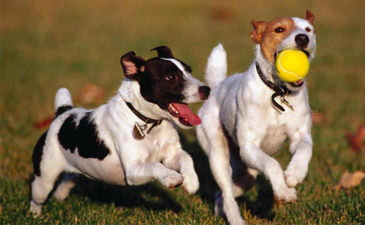 El Congreso ha aprobado una ley para considerar a los animales como