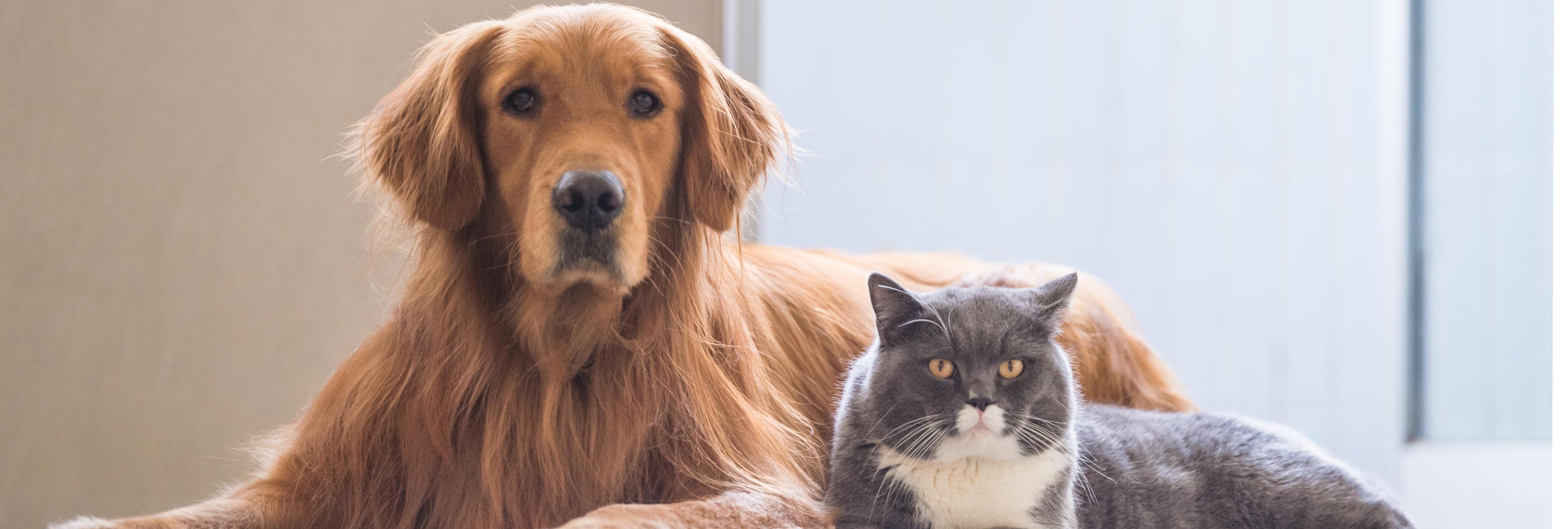 """Los animales dejarán de ser """"cosas"""" en la legislación, para considerarse """"seres sensibles"""""""