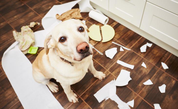 El perro llevaba cinco meses en la vivienda sin poder salir a la calle