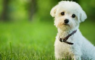 """Retiran la custodia del perro que """"se tiró por la ventana"""" para huir de dos okupas en Lugo"""