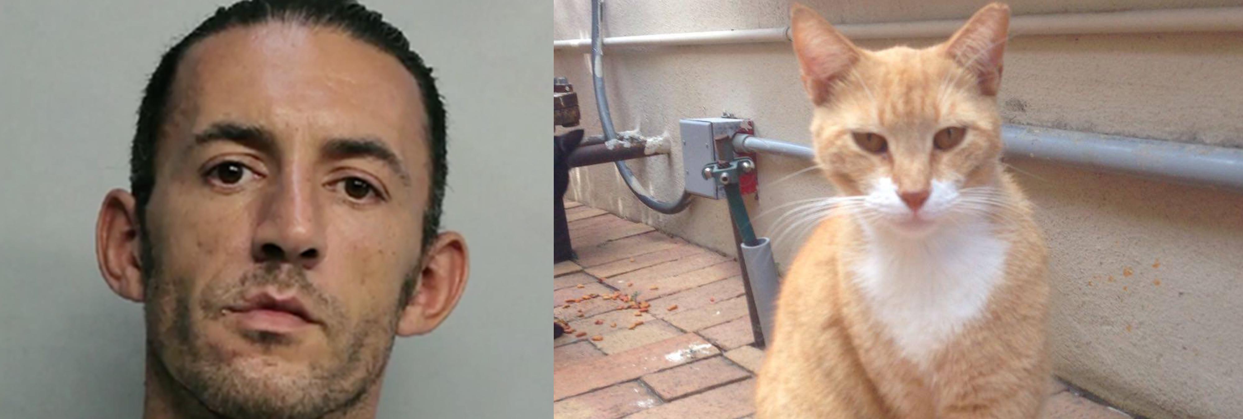 Deportan a un ciudadano griego por matar a un gato callejero con una ballesta en EEUU