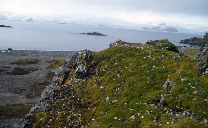 La Antártida ha reverdecido como consecuencia del cambio climático