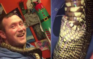 La verdad tras el vídeo de la serpiente comiéndose a sí misma que se ha hecho viral
