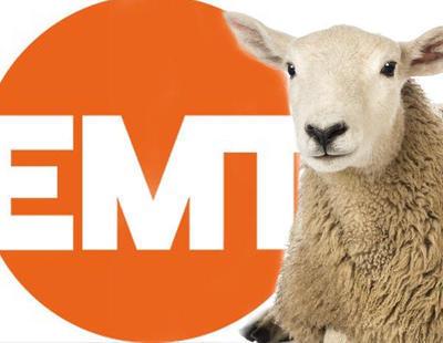 Una jueza denuncia a El Mundo Today por una noticias satírica sobre sexo con ovejas
